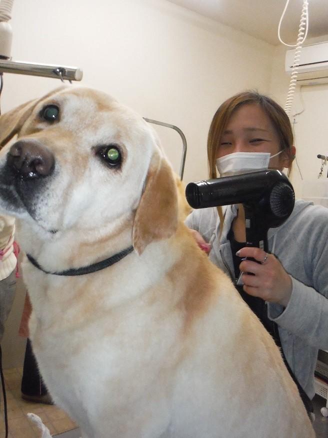 【犬のトリマー】未経験者も可〇 正社員募集!薬師店